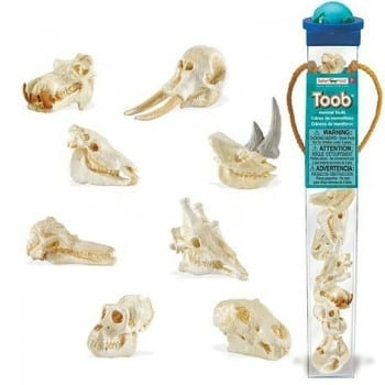 safari toobs mammal skulls are the best replicas for children to explore the world's mammals